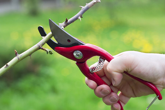 Tips for pruning plants in the garden