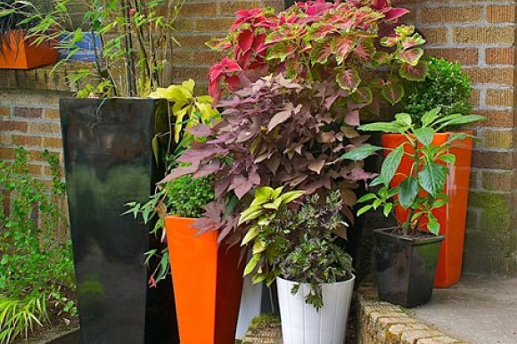 Containers for shady gardens